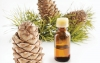 Pine Cone Extract and its Link to Sagging Skin