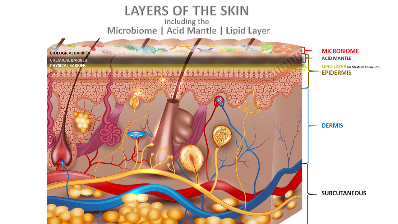 Layers of Skin Acid Mantle