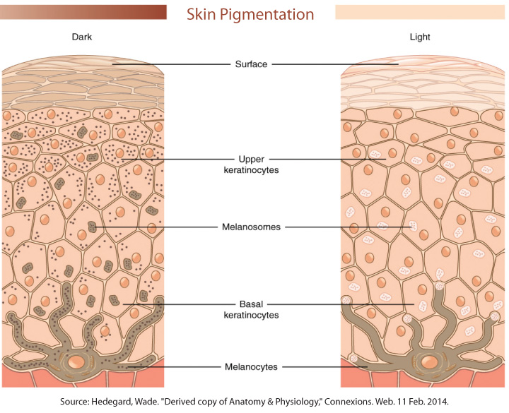The Physiology of Skin of Color