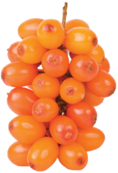 Sea Buckthorn Berry – New Super Fruit
