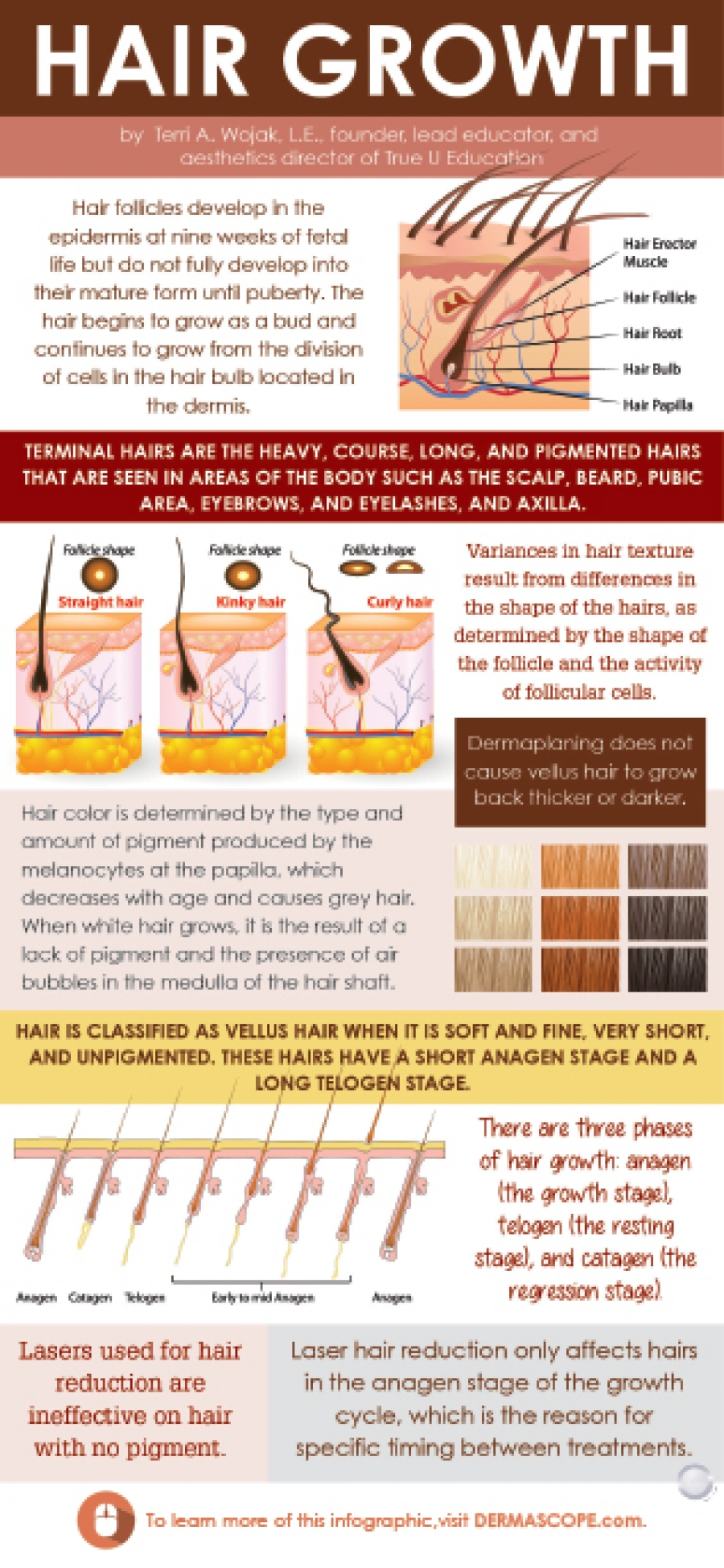 Infographic: Hair Growth