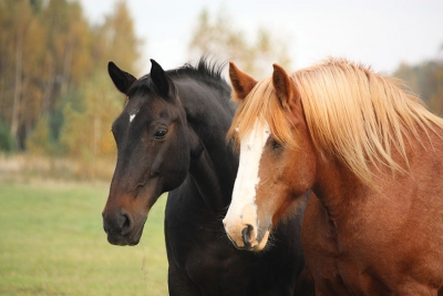 Saddle up, Skin Care: Introducing Horse Fat into a Routine