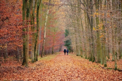Make Like a Tree: The Benefits of Forest Bathing