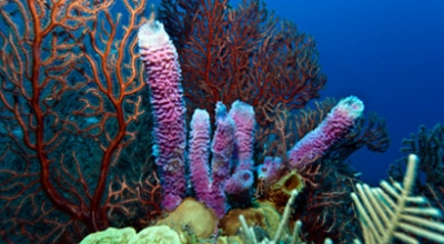 Coral Produces Sunscreen Compounds with Potential for Human Use