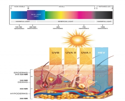 Fact or Fiction: Skin damage caused by HEV light may  be as harmful as the damage caused  by UVA and UVB light combined.