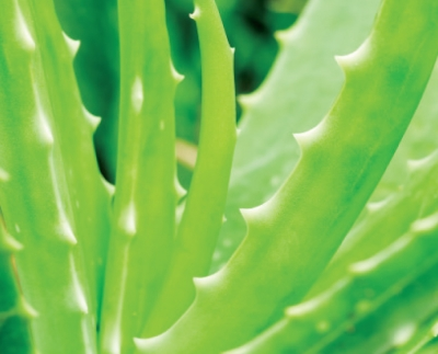 Aloe, Skin Care, and  California Proposition 65