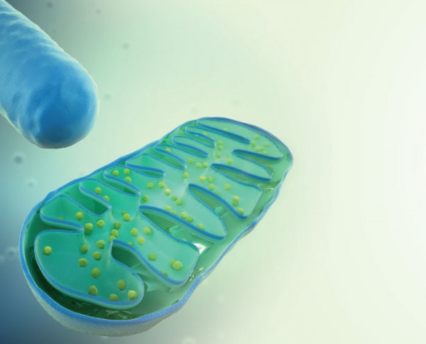 The Nature of  Mitochondria